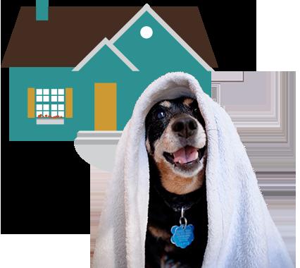 Dog Rehoming Program
